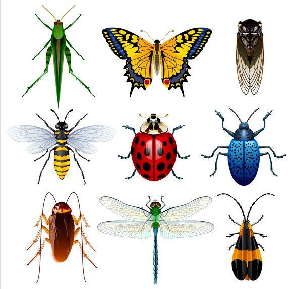 Insecta Palooza