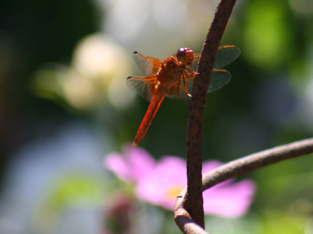 A dragonfly resting on the wrought iron topiary sphere